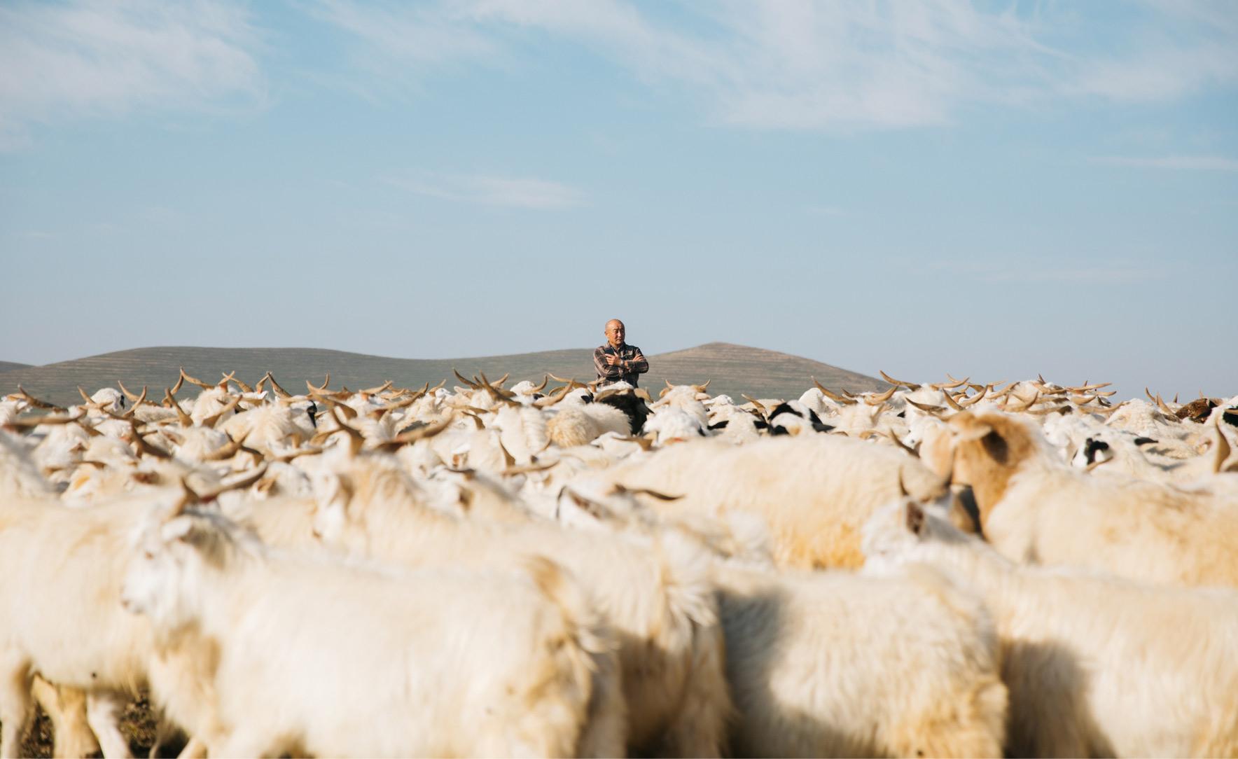 Mongolian Cashmere image